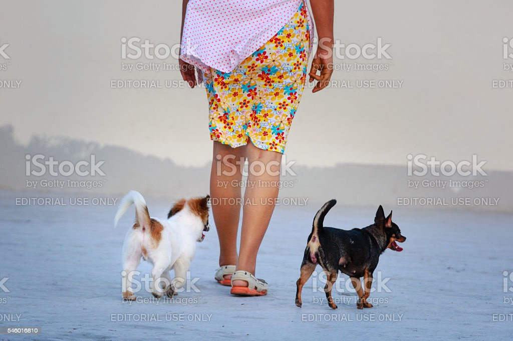 woman and pet dog was walking on the terrace stock photo