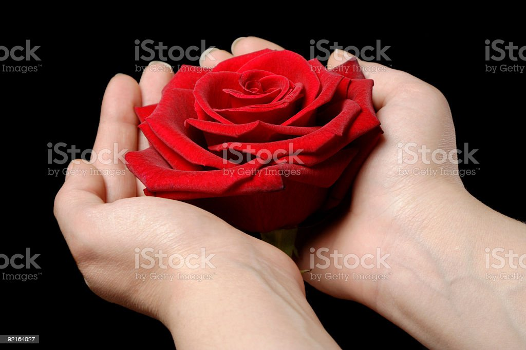 woman and red rose royalty-free stock photo