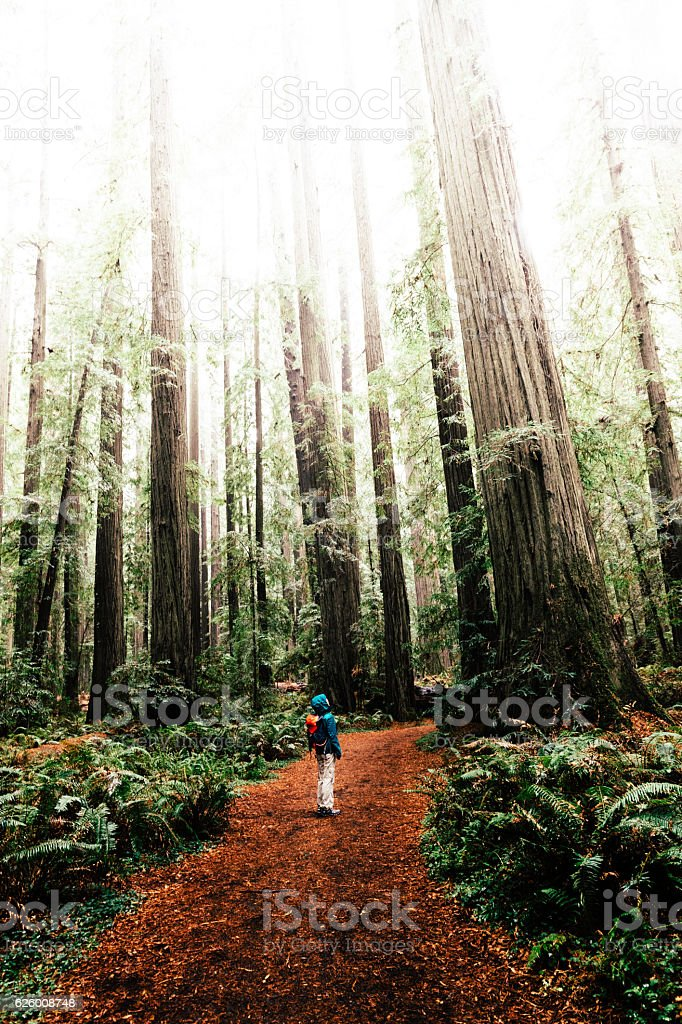 Woman at Humboldt Redwoods State Park, CA stock photo