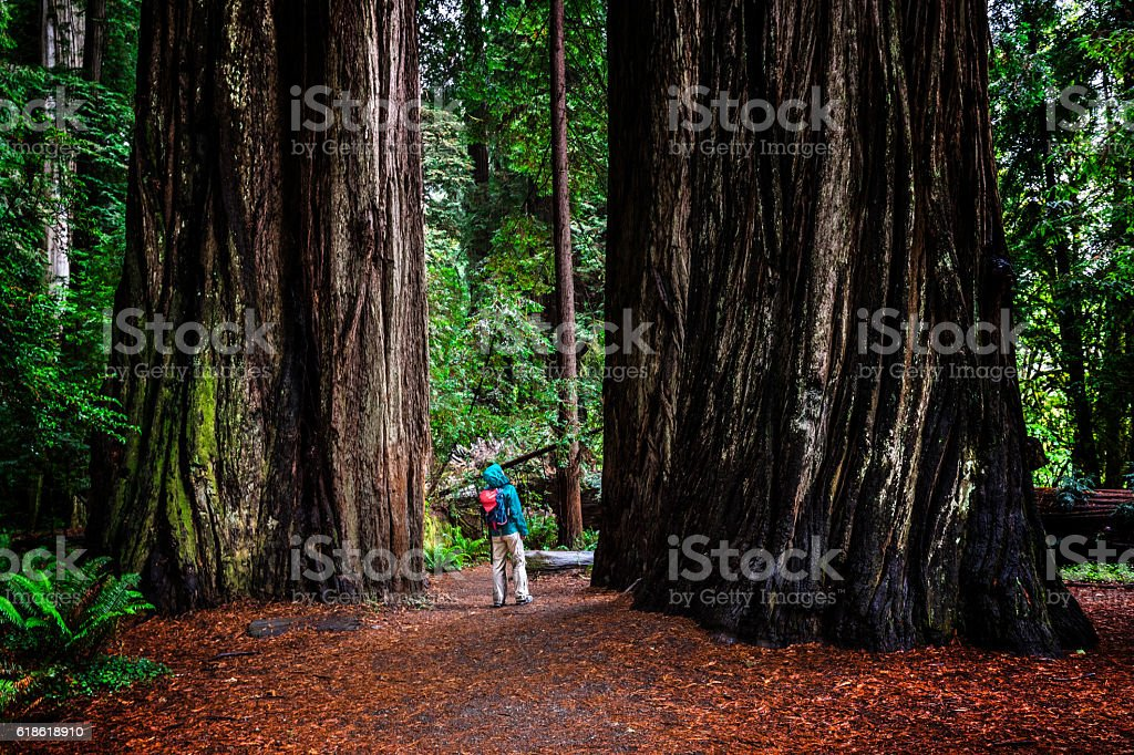 Woman at SG in Jedediah Smith Redwoods State Park, CA stock photo