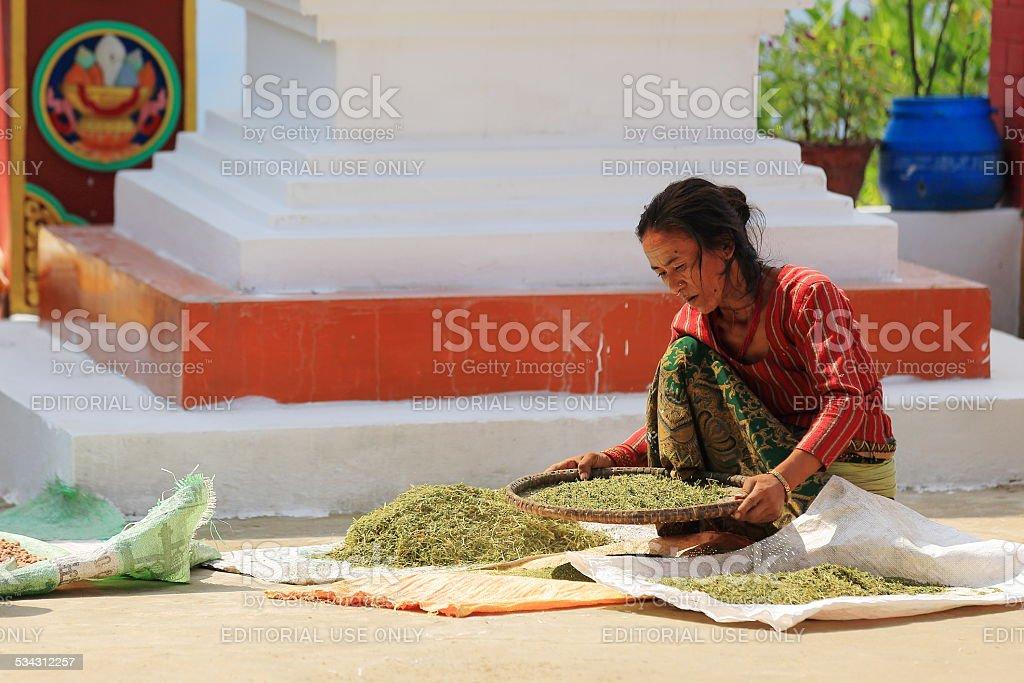 Woman at work. Thrangu Tashi Yangtse monastery-Nepal. 0997 stock photo