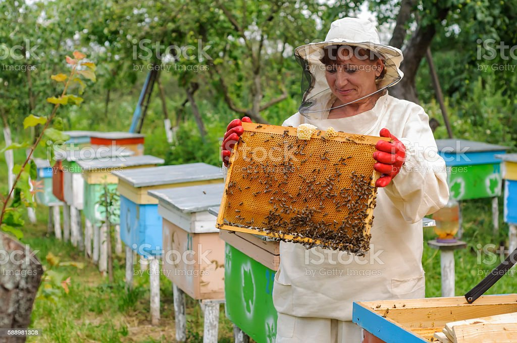 woman beekeeper looks after bees stock photo
