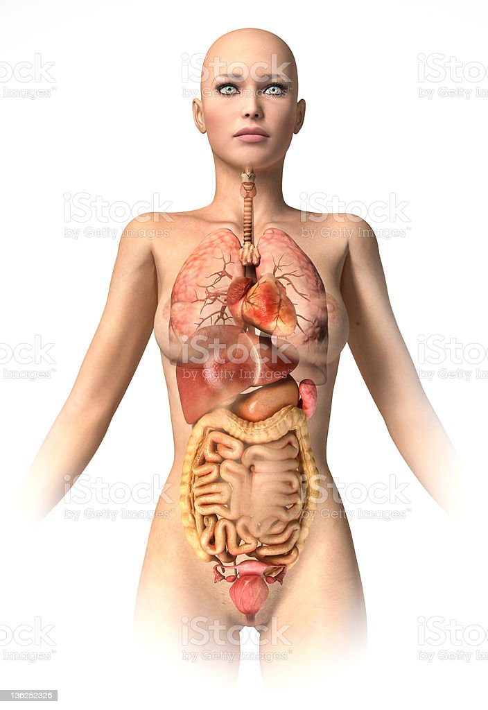 Woman body  with interior organs superimposed. royalty-free stock photo