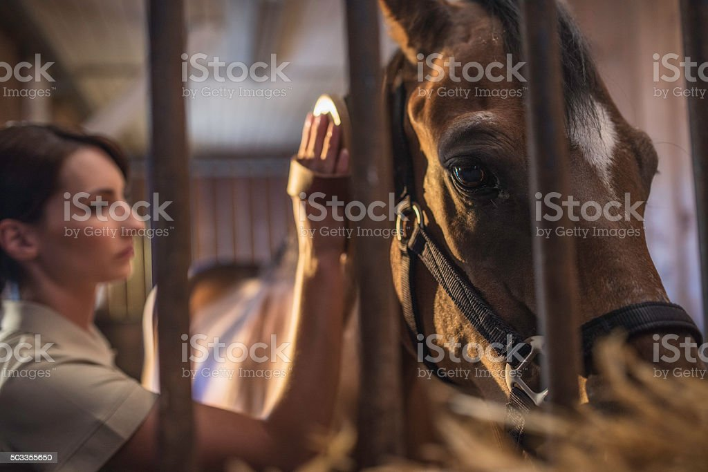Woman brushing a horse's head in a stable stock photo