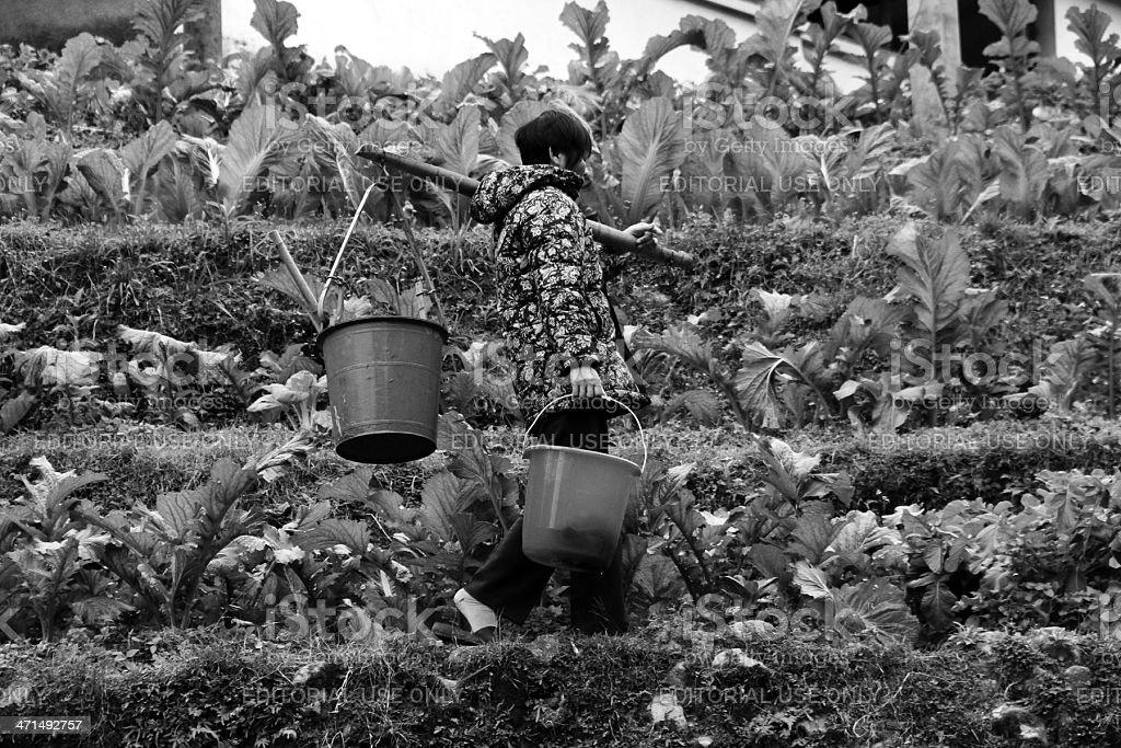 Donna portare Buckets Trogolo divisione di terrazze In Cina foto stock royalty-free
