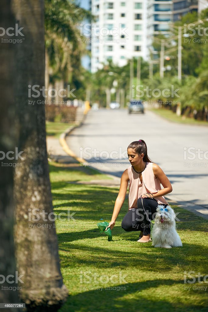 Woman Cleaning Droppings Of Her French Poodle Dog stock photo