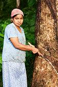 Woman collecting latex on the rubber tree plantation, Sri Lanka