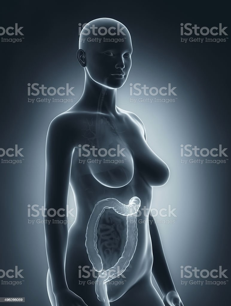 Woman colon anatomy stock photo