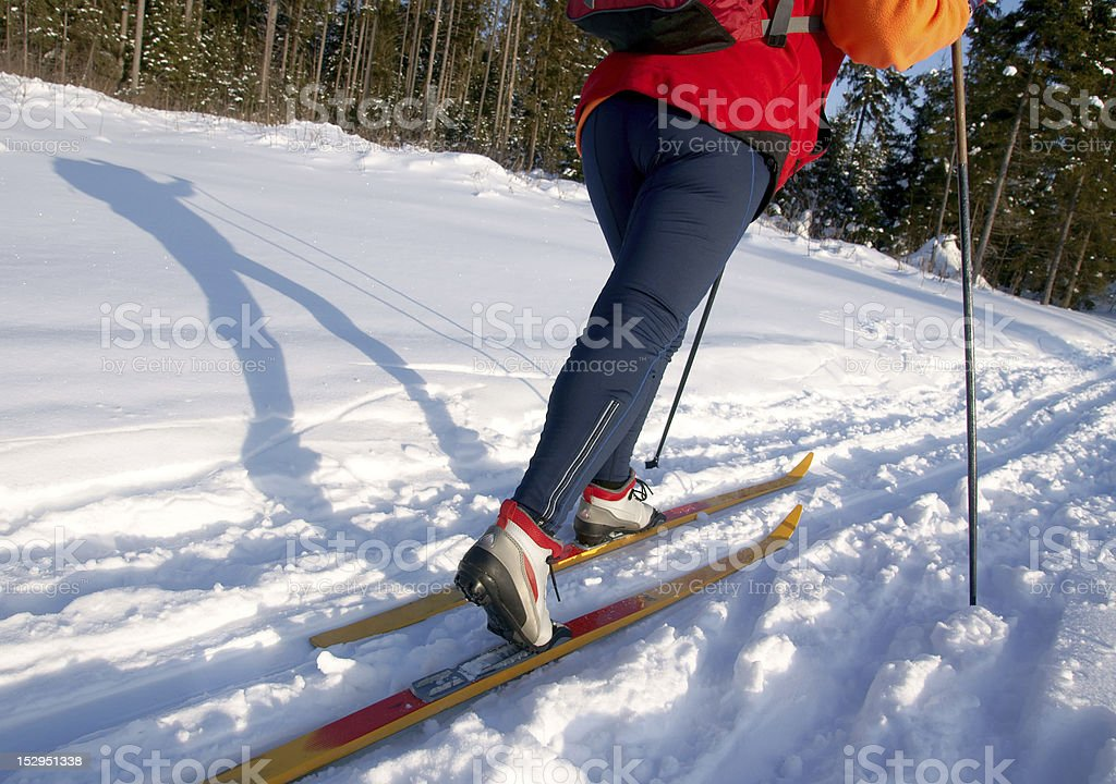 Woman cross country skier in forest on a sunny day royalty-free stock photo