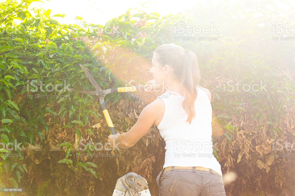 Woman Cuts Overgrown Creepers stock photo