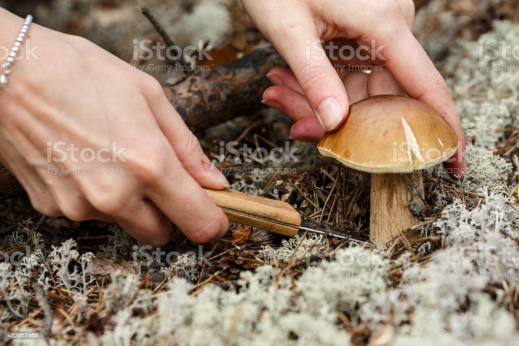 Woman cuts the cep stock photo