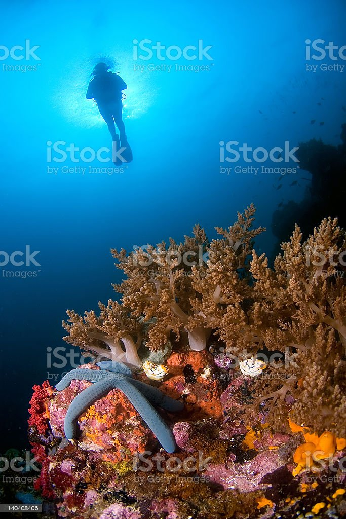 Woman diver above soft coral royalty-free stock photo