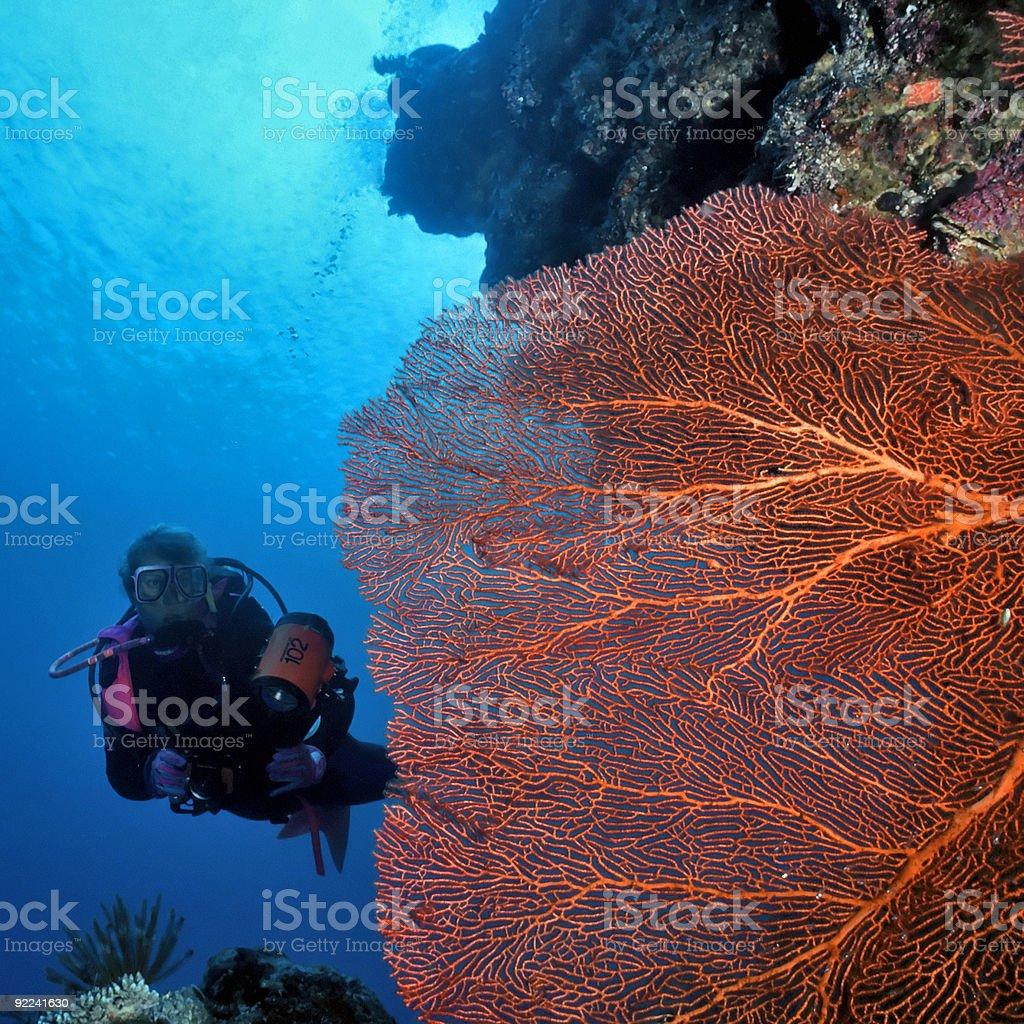 Femme de plongeur et ventilateur de la Mer Rouge photo libre de droits