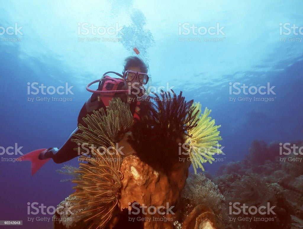 Femme de Plongeur et corail sous-marin photo libre de droits