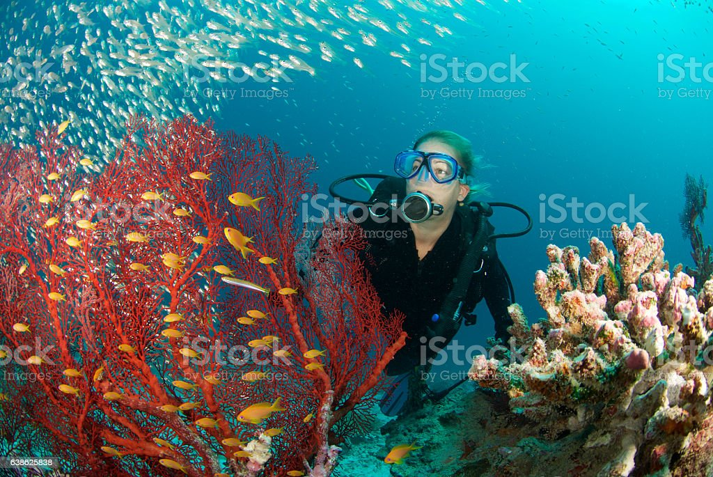 woman diver stock photo
