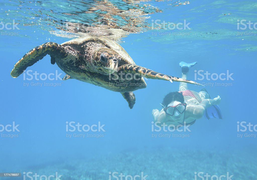 Woman diving with a Hawksbill Sea Turtle, Seychelles stock photo