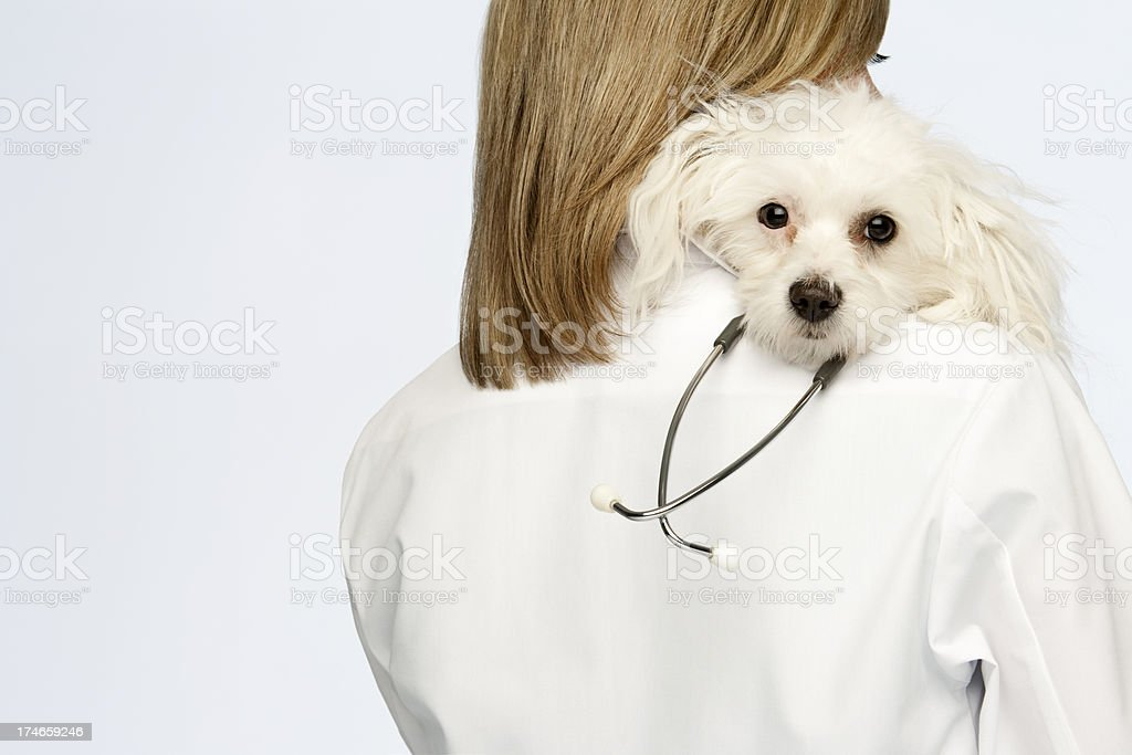 Woman Doctor With Dog royalty-free stock photo