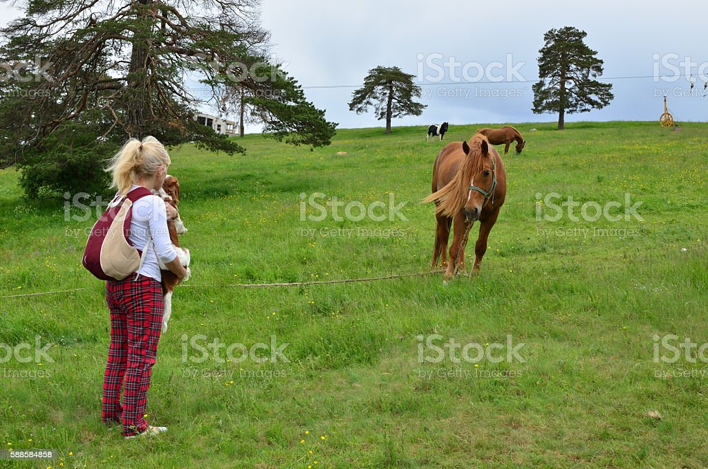 Woman, Dog and a Horse in the Countryside stock photo