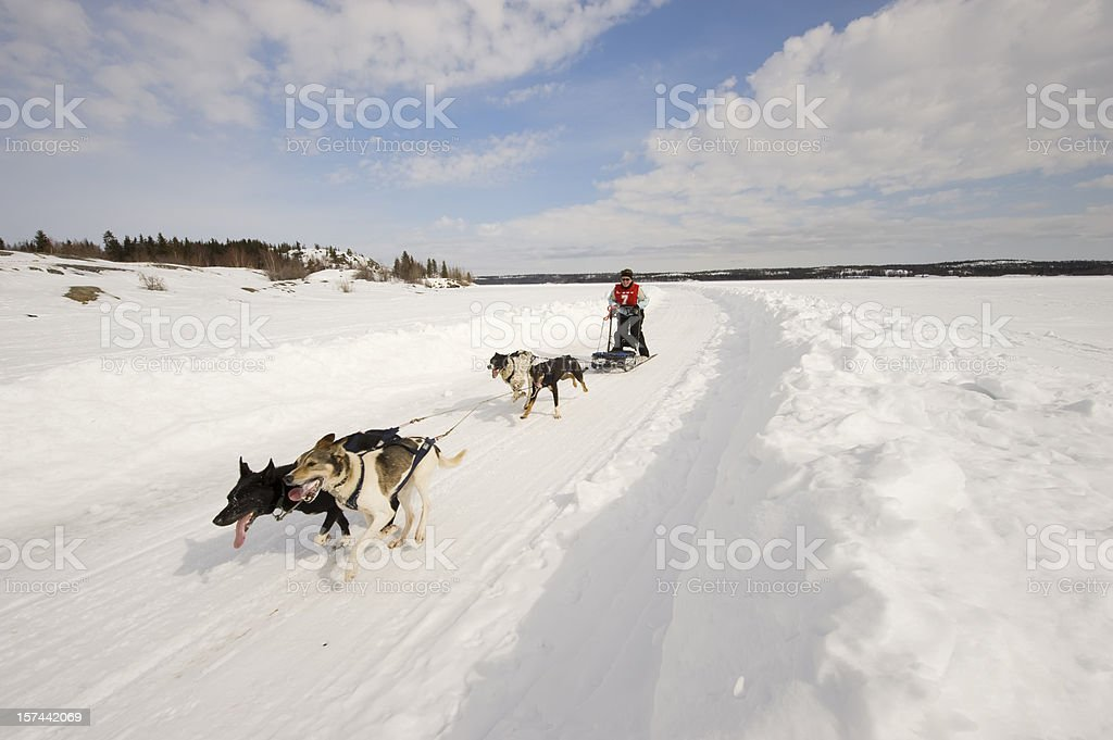 Woman Dogsled Racing in the Arctic, Yellowknife. stock photo