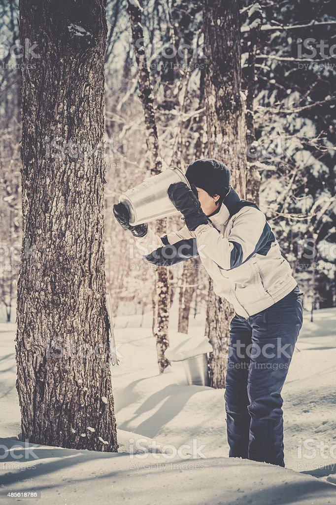 Woman Drinking Bucket Collecting Sap at Sugar Shack stock photo