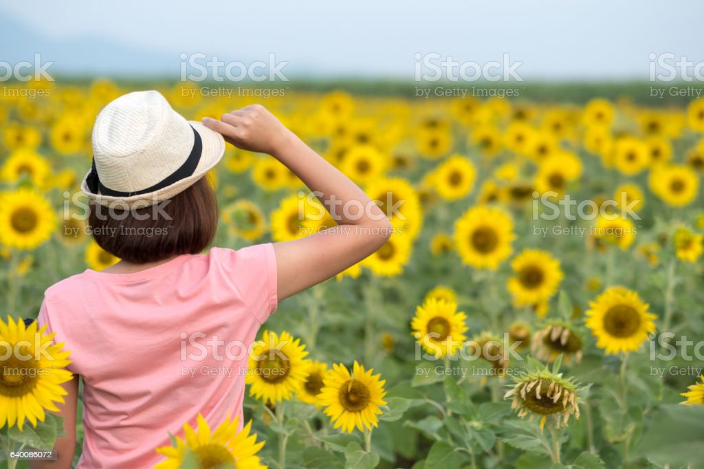 Woman enjoying sunflower field stock photo