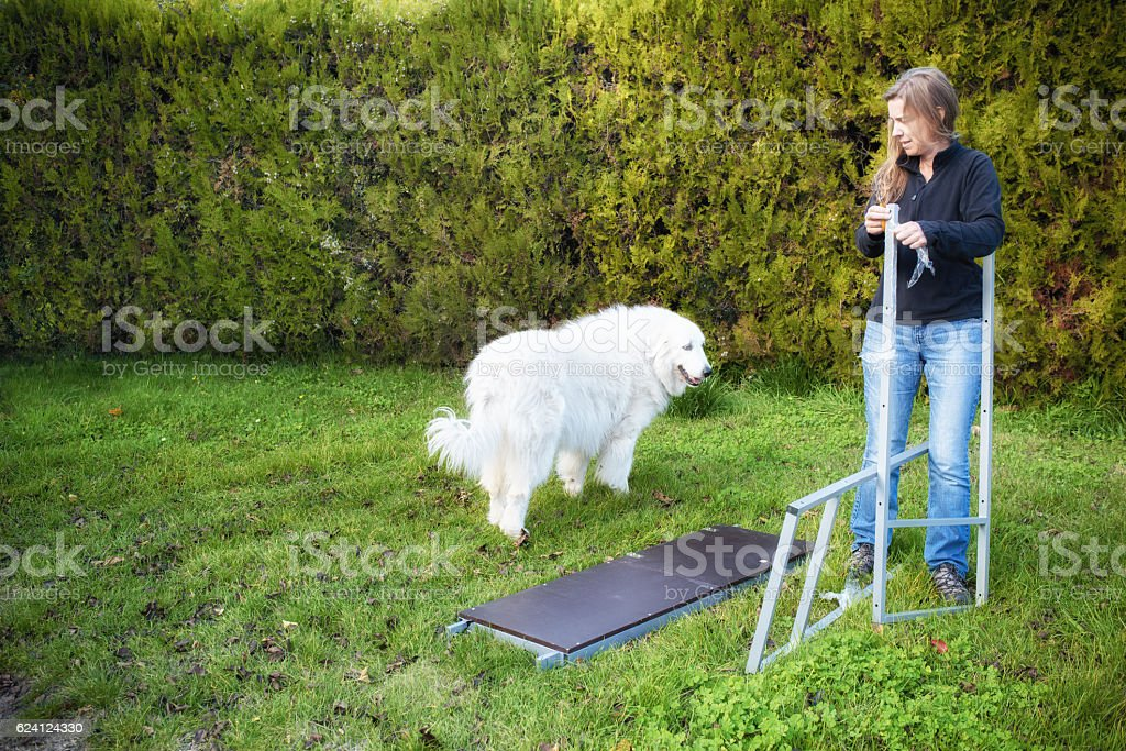 Woman erecting scaffolding, with dog stock photo