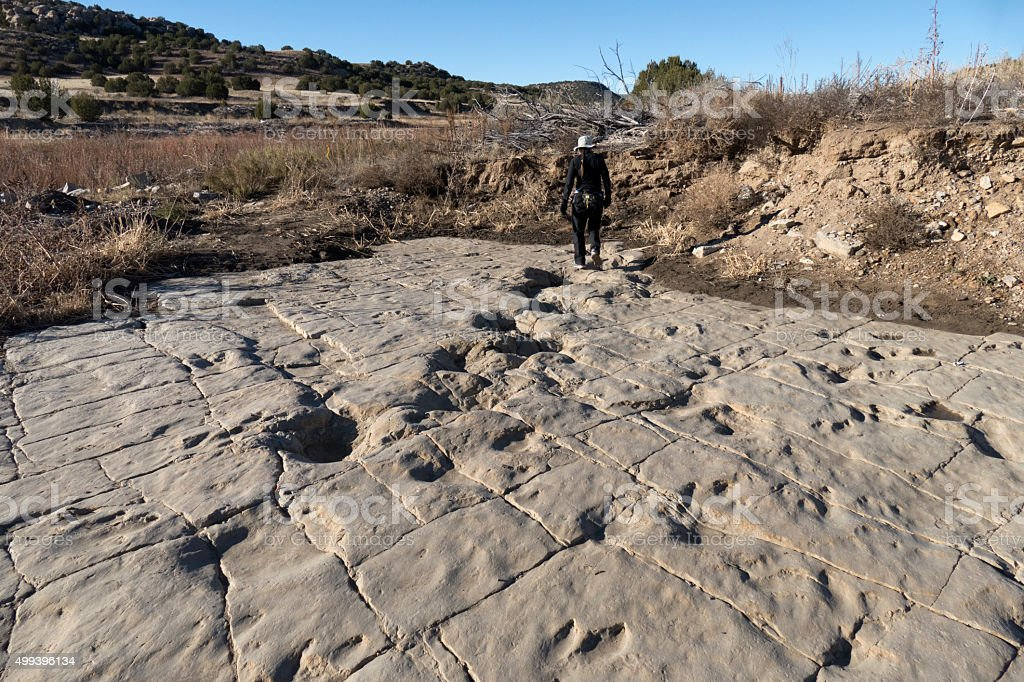 Woman explores newly uncovered dinosaur tracks Colorado stock photo