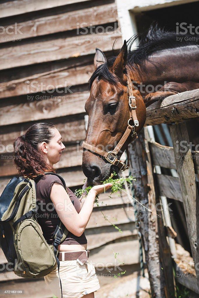 Woman  feeding a white horse stock photo