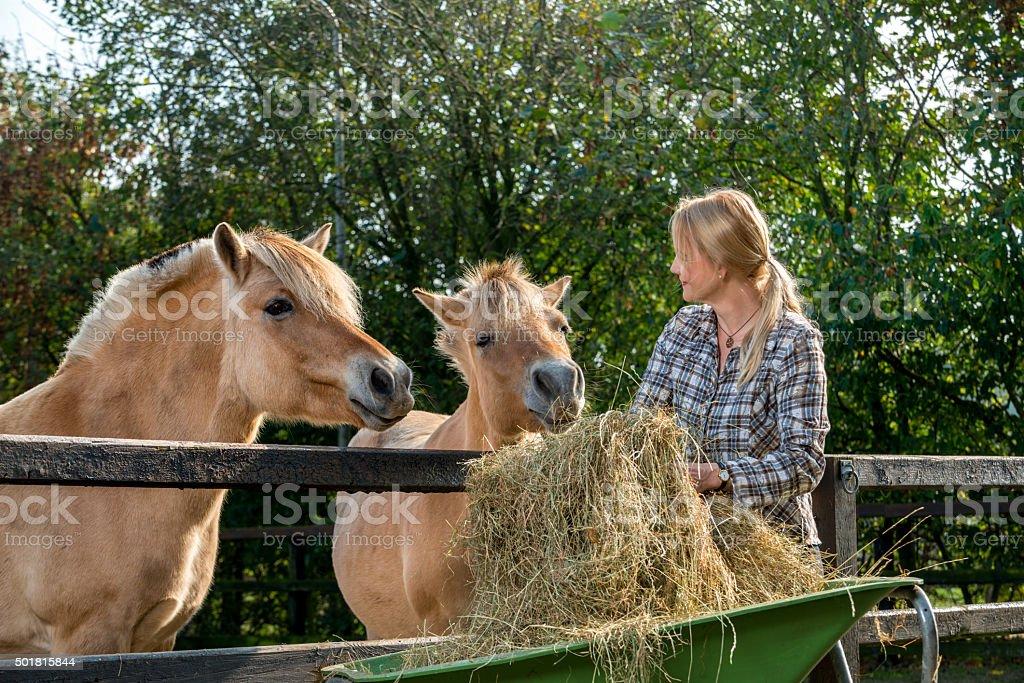 Woman feeding her horses stock photo