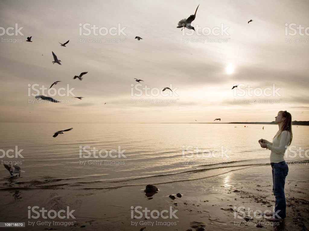 Woman Feeding Seagulls on Beach royalty-free stock photo
