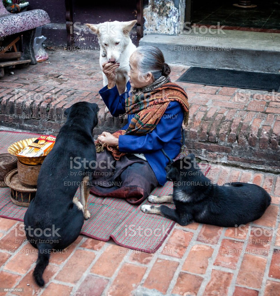 A woman feeding the dogs in the street stock photo