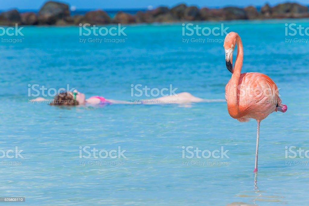 Woman floating on a back in Flamingo beach. Aruba stock photo