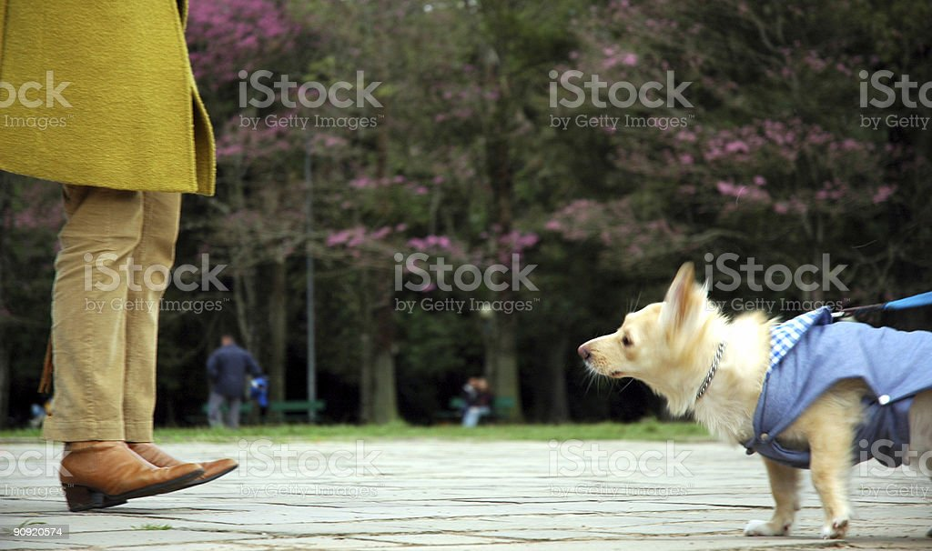 Woman Foots and dog royalty-free stock photo