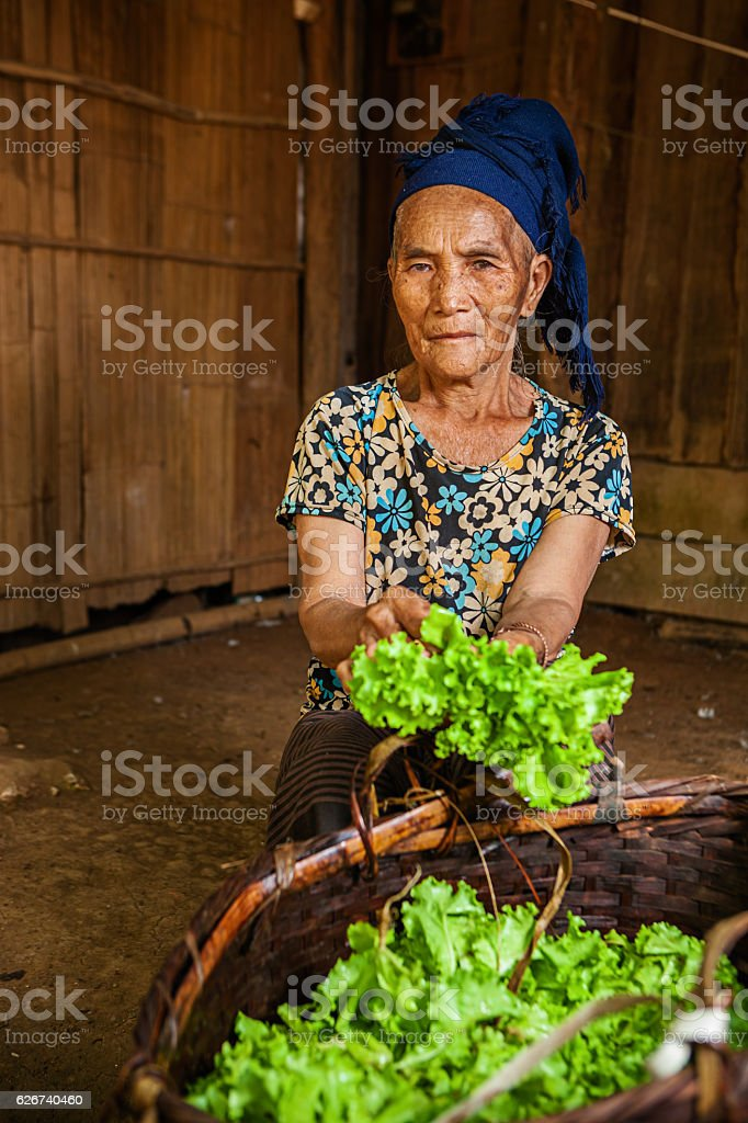 Woman from the hill tribe cleaning lettuce stock photo