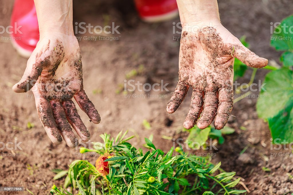 woman gardener replanting flowers stock photo