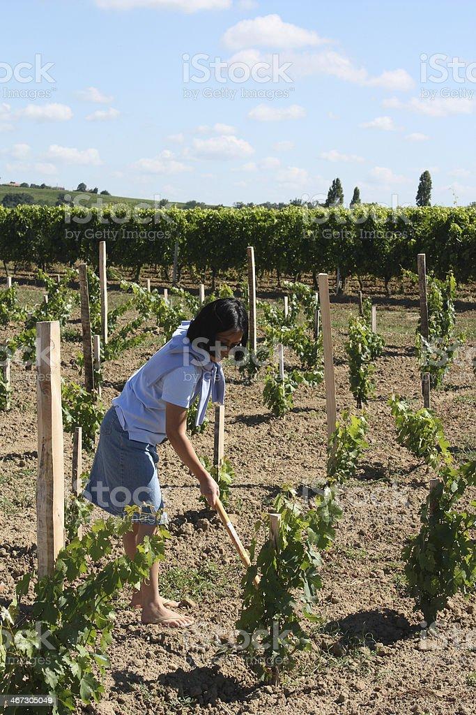 woman gardening in a vineyard stock photo