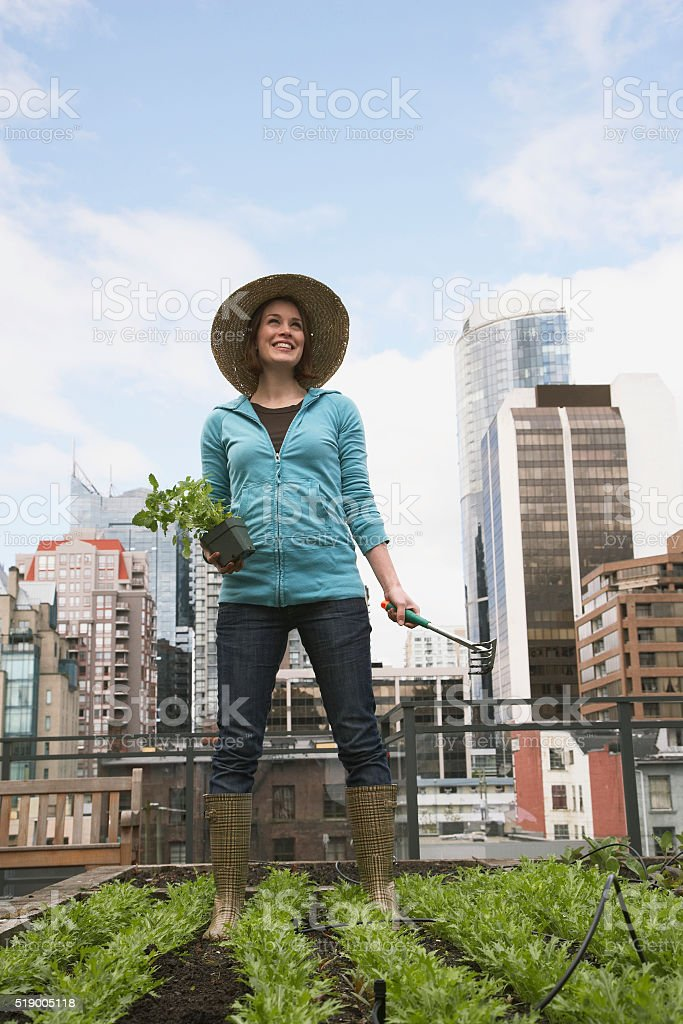 Woman gardening on roof stock photo