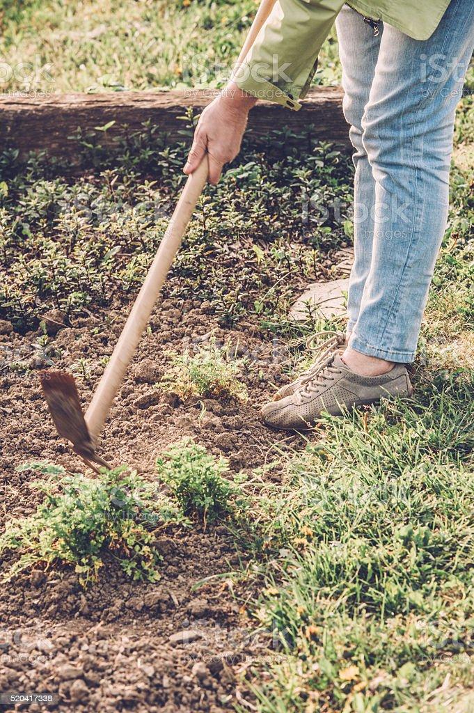 Woman Gardening stock photo