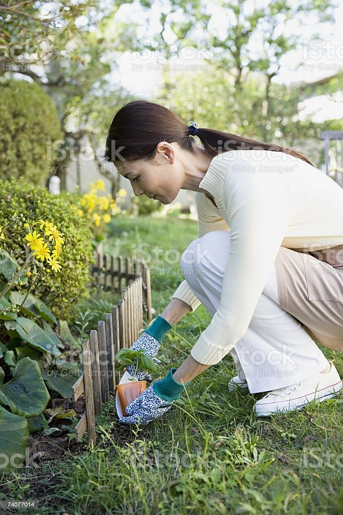 Woman gardening royalty-free stock photo