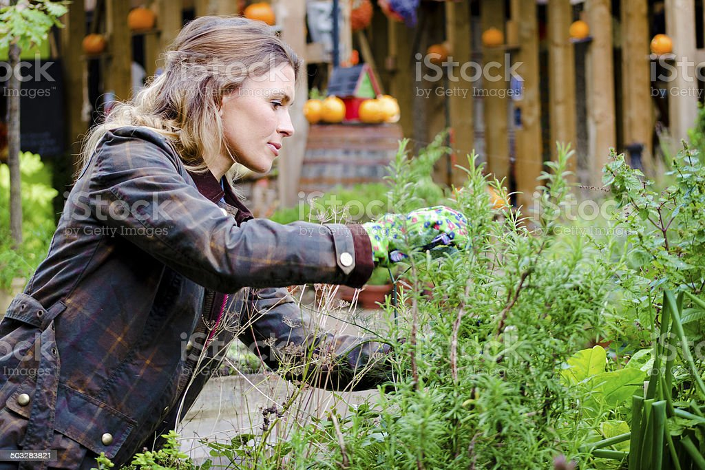 Woman Gardner Taking Care Of Plants, Prune. stock photo
