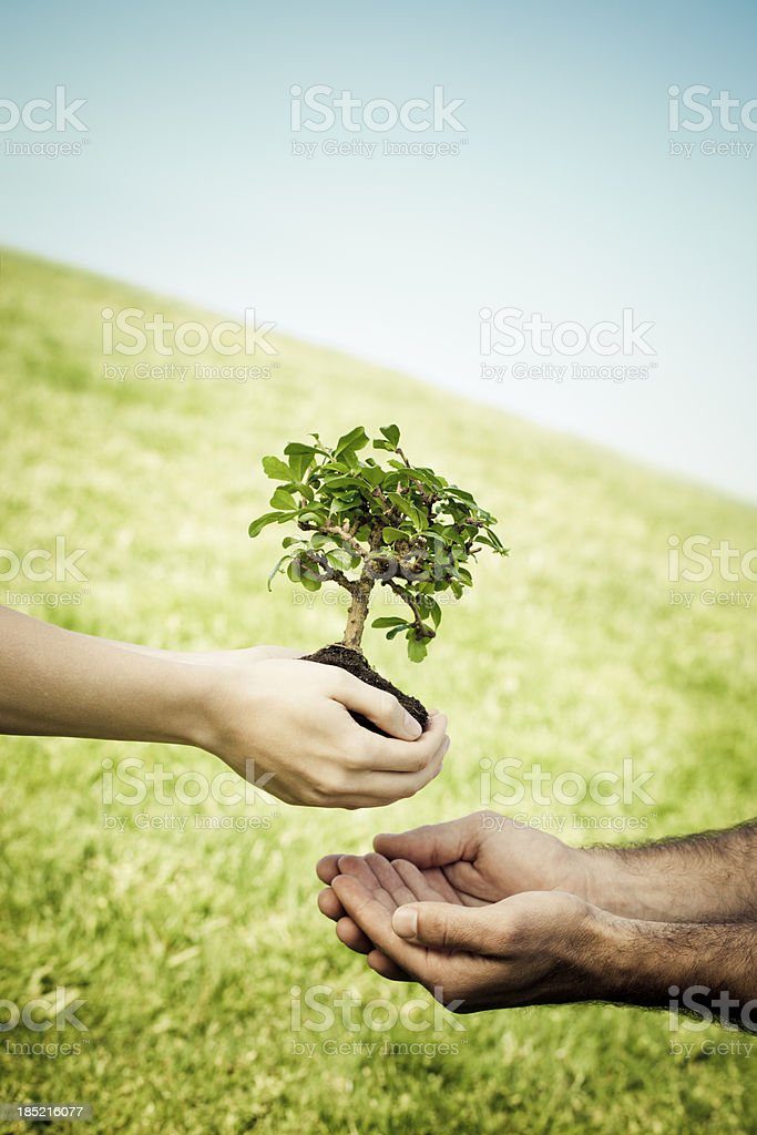 woman giving a bonsai tree to male hands royalty-free stock photo