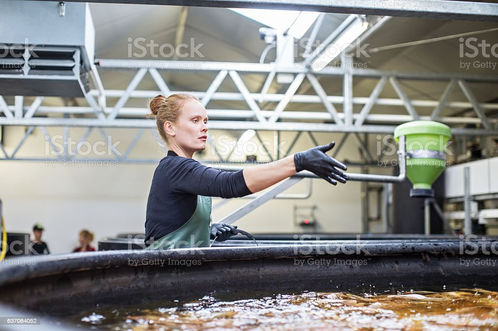 Woman giving food to fishes in tanks stock photo