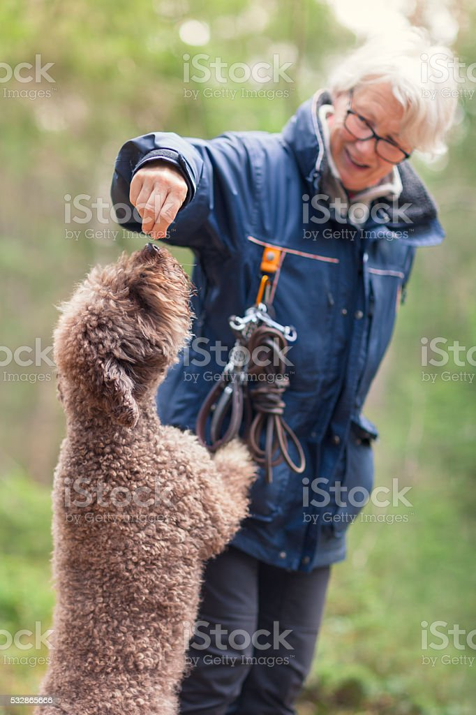 Woman giving her dog a treat stock photo