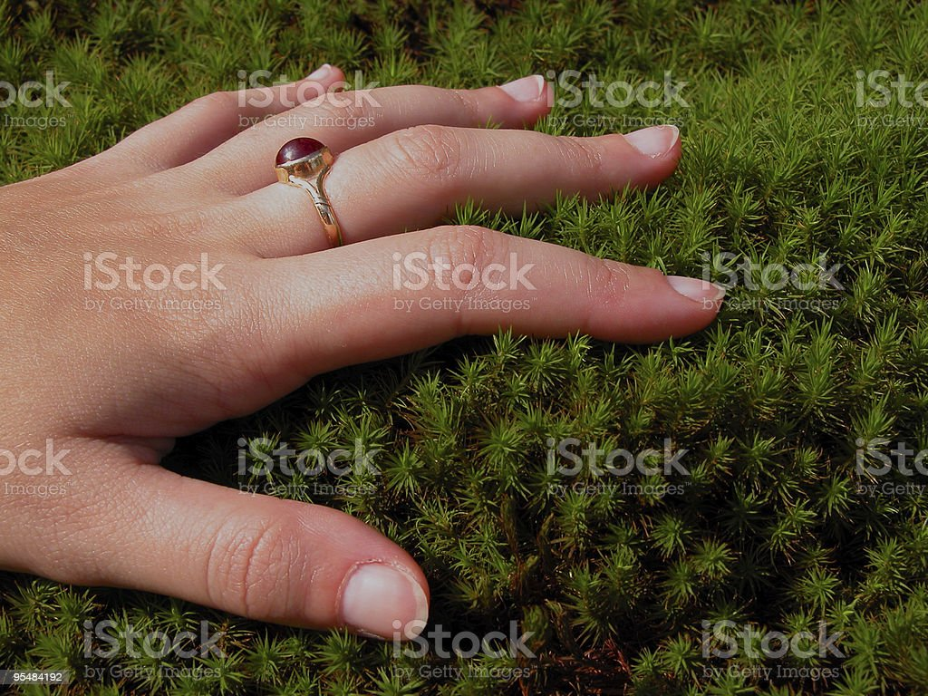 Woman hand and moss royalty-free stock photo