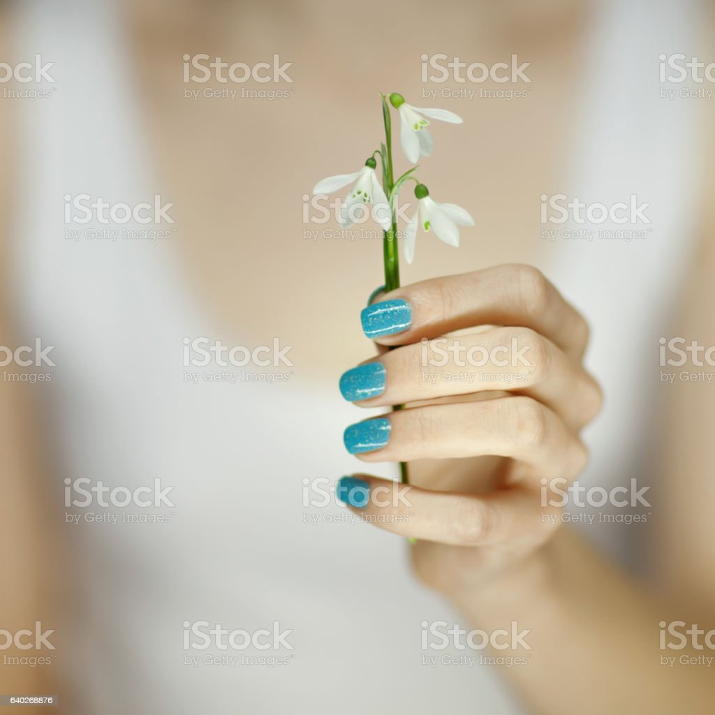 woman hand holding springtime flower stock photo