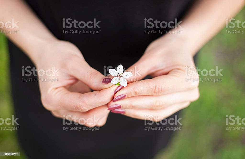 Woman hand with a spring blossom. Sakura flower stock photo