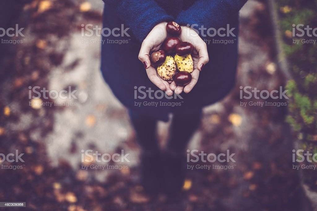 Woman hands full with chestnuts stock photo