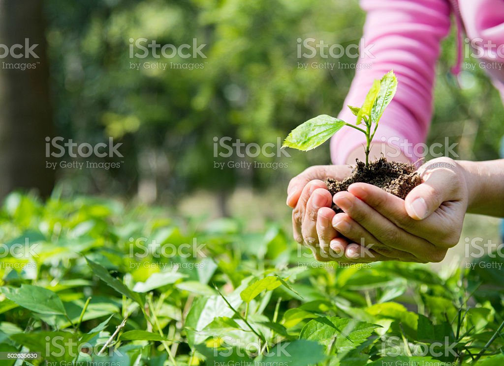 Woman hands holding a small plant stock photo