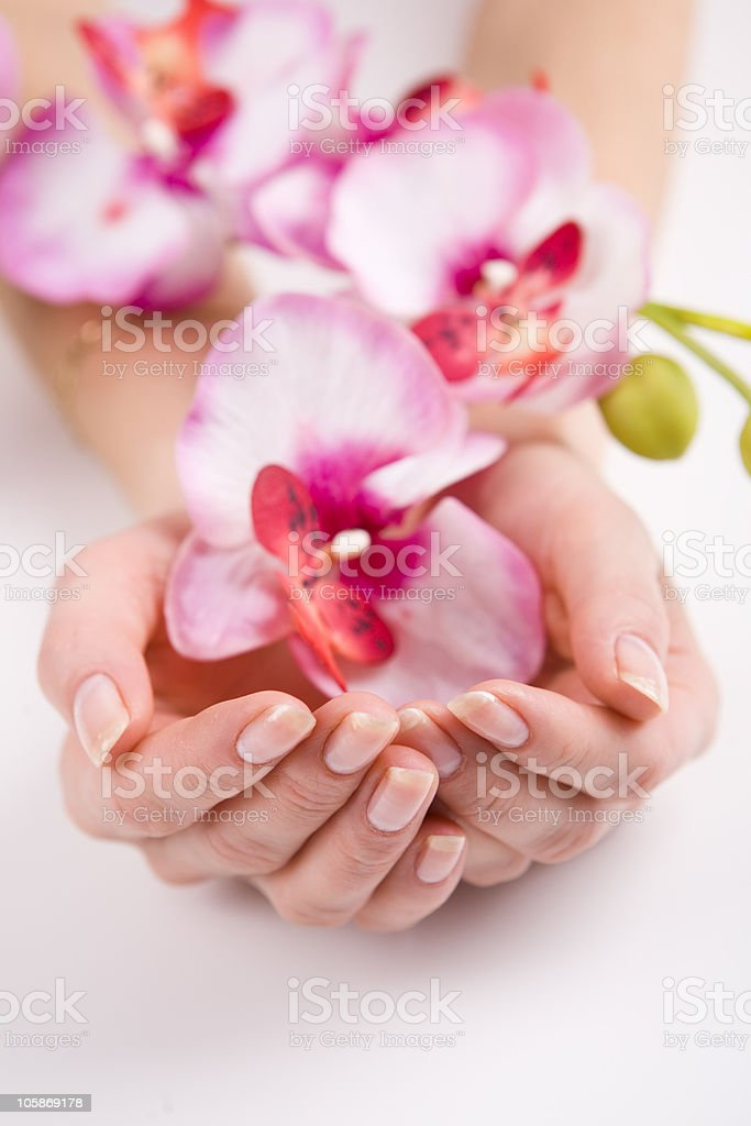 Woman hands holding pink flowers royalty-free stock photo