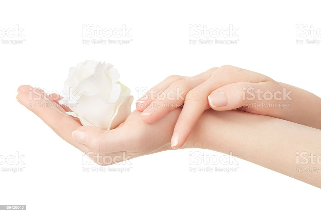 Woman hands with manicure holding white rose stock photo
